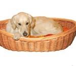 Køb hundekurven efter hundens størrelse (foto petworld.dk)