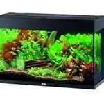 Juwel akvarie (foto: petworld.dk)